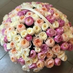 Корзина 101 нежная пионовидная роза R932